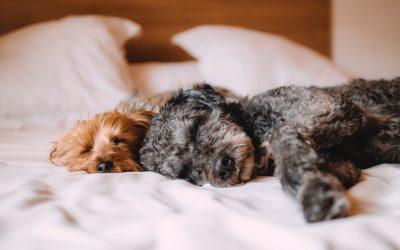 Priporočila za dober spanec